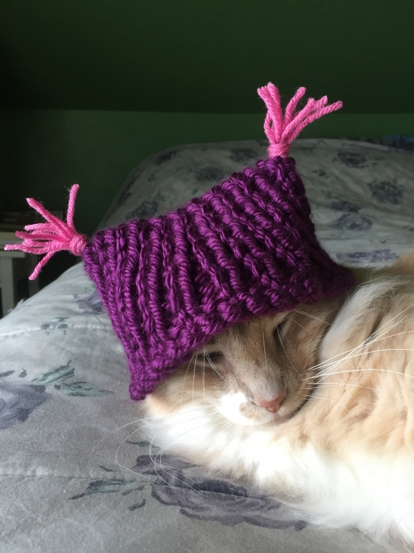 pussyhat #19.5 QA for a bunnyhat